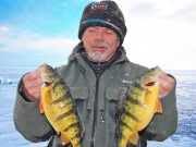 John Whyte with jumbo yellow perch